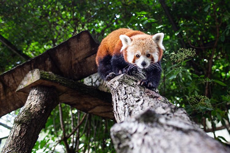 Drayton Manor Zoo & Park Photography